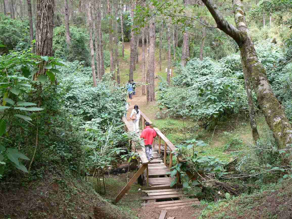 Walking through the Pine forest at Camp John Hay, Baguio City, Philippines